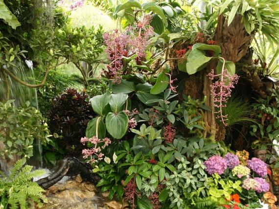 Fleurs tropicales 29