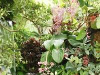 Fleurs tropicales 30