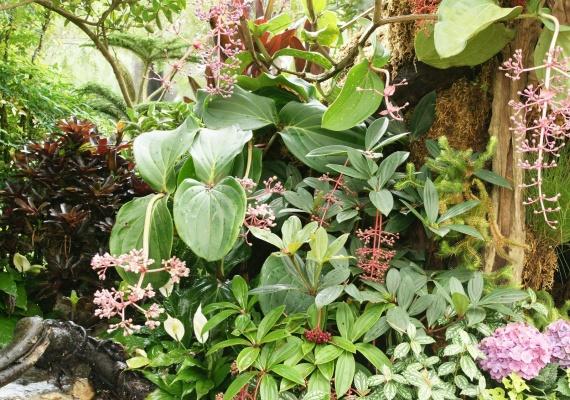 Fleurs tropicales 31