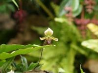 Fleurs tropicales 32