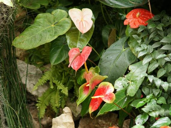 Fleurs tropicales 33