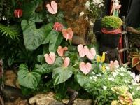Fleurs tropicales 35