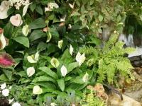 Fleurs tropicales 37