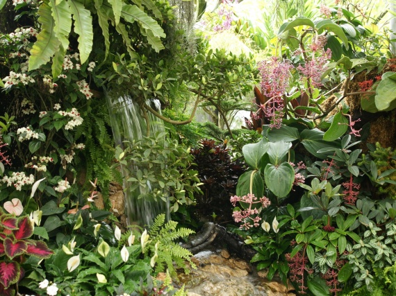 Fleurs tropicales 38