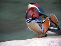 Oiseau multicolore 1