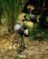 Oiseau multicolore 2