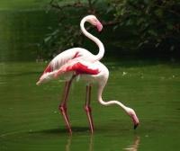 Oiseau multicolore 6