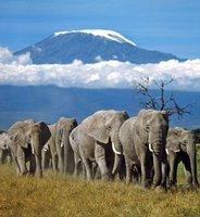 le-kilimandjaro-en-tanzanie-152096