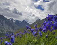 Altai Mountains--- Russia