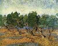Van Gogh - Les oliviers