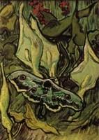 Van Gogh - Papillon