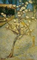 Van Gogh - Petit poirier - 1888