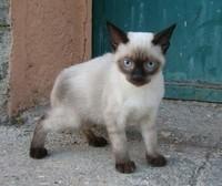 gattino_2603