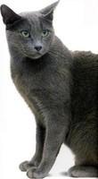 splendida blu di russia sfigata (2)