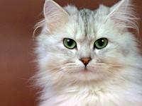 sguardo-da-gatto