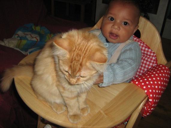 max et le chat