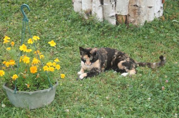 P'tit repos dans l'herbe