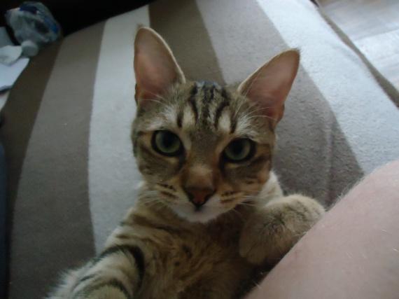 Tu veux ma photo ??