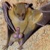 Alpha Bat