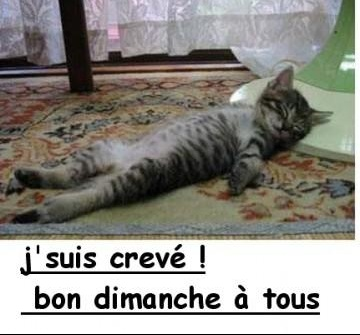 private-category-bon-dimanche-chat-img