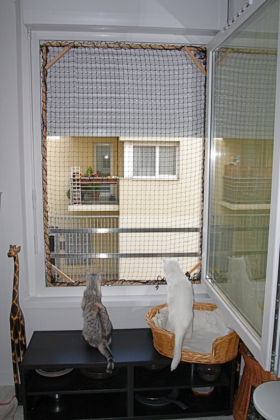 Securiser des fenetres chats forum animaux - Protection fenetre chat ...