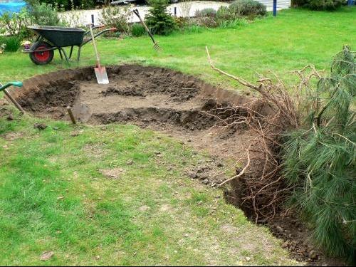D terrer un buis jardinage forum vie pratique - Quand tailler un sapin ...