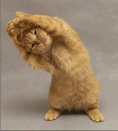 chat yogi