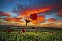 fleurs sur coucher de soleil