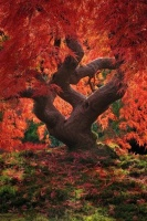 trop beau cet arbre!