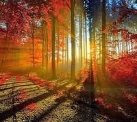 Le soleil entre les arbres