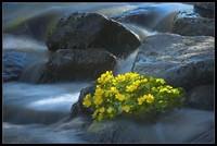 Cascade & fleurs