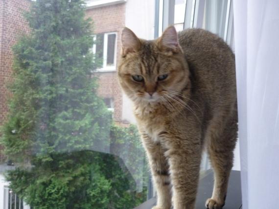 Chester, que j'ai réveillé pour une photo :D Honte à moi!