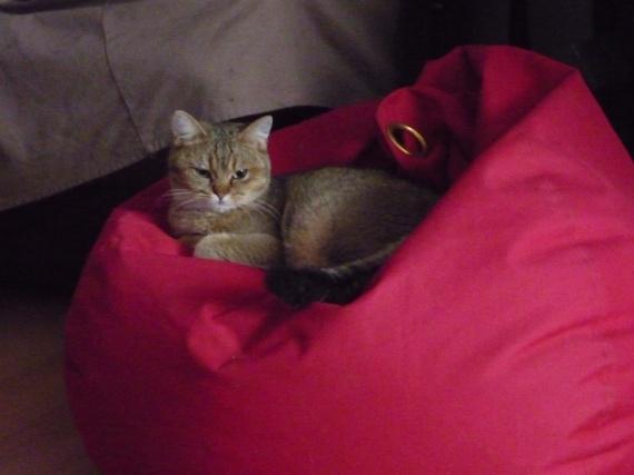 Mon chat du Cheshire