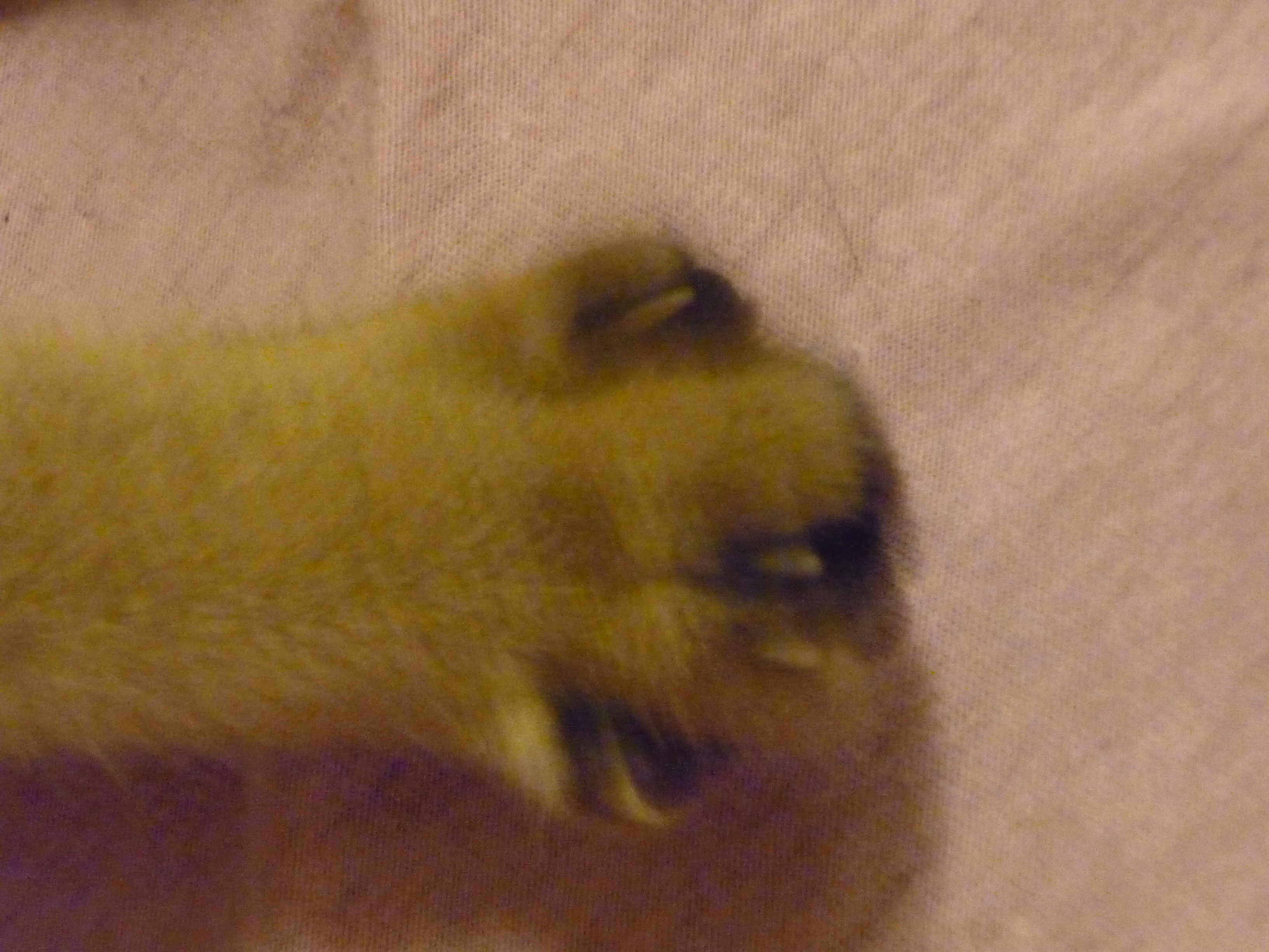 Bruit Griffe Chien Parquet griffes arrières chez le chat? - chats - forum animaux
