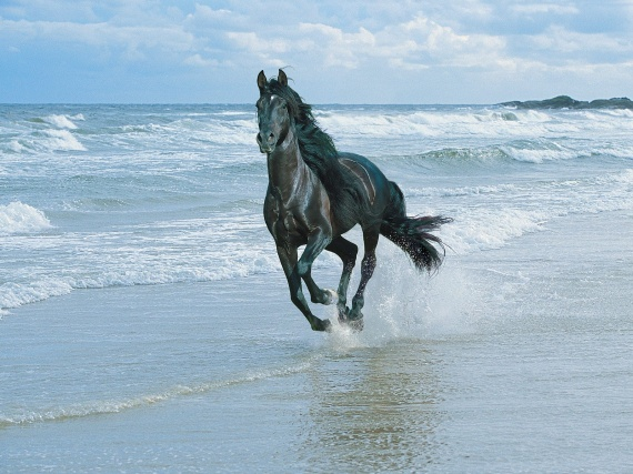 black-horse-and-sea-wallpapers_12032_1600x1200