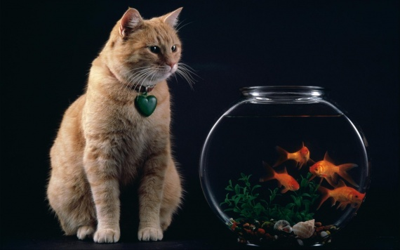 cat-and-fish-bowl-wallpapers_13043_1920x1200