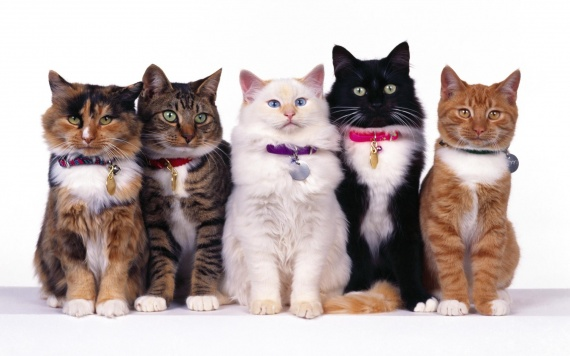 cats-line-up-wallpapers_13044_1920x1200