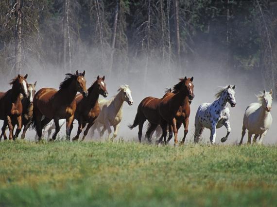 horses-running-wallpapers_12569_1440x900