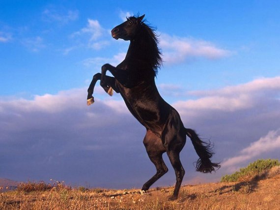 rising-horse-wallpapers_12851_1024x768