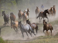 running-horses-wallpapers_12987_1600x1200