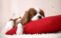 sleep-so-well-wallpapers_7670_1600x1200
