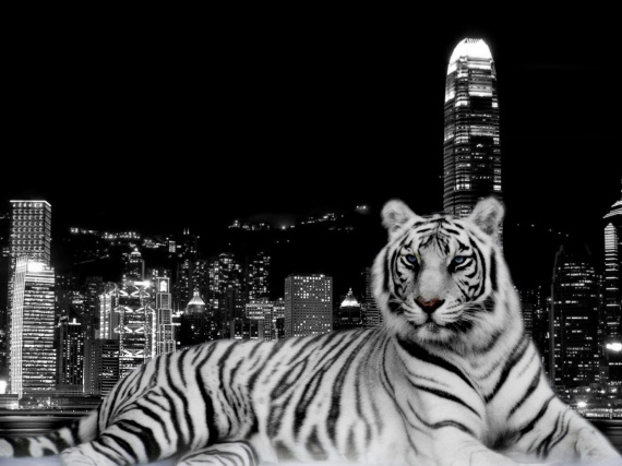 tiger-and-the-city-wallpapers_12775_1600x1200