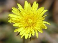 floral (5)