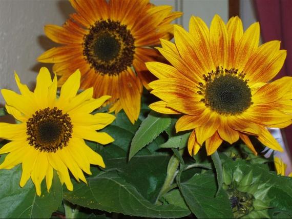 floral (6)
