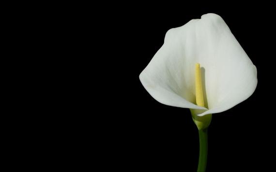 floral (8)