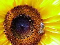 floral (9)