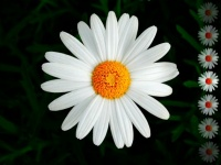 floral (11)