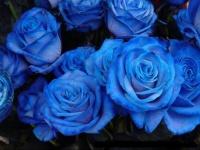 floral (12)