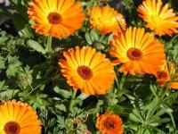 floral (13)