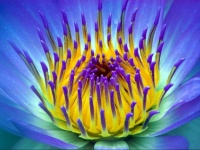 floral (15)